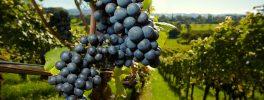 Et si vous investissiez dans le vin ?